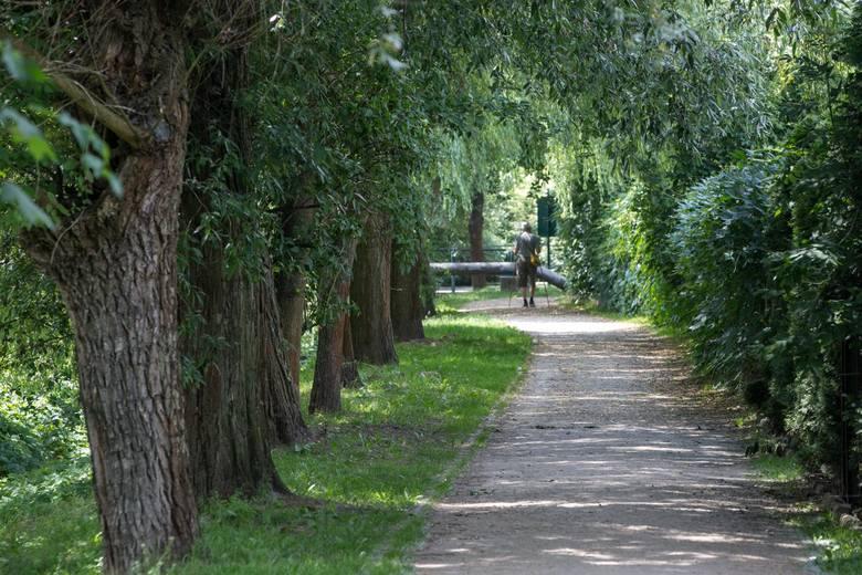 """""""Młynówka Królewska - tworzymy najdłuższy park w Polsce"""". W ramach projektu powstać miałaby ścieżka - wzdłuż naturalnego koryta Młynówki Królewskiej"""