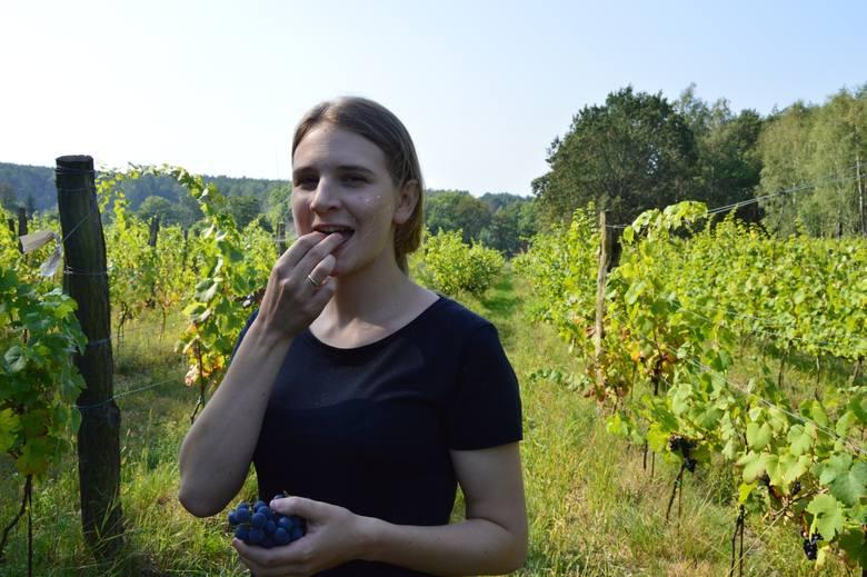 Winnica Marcus w Sterkowie to bardzo urokliwe miejsce!