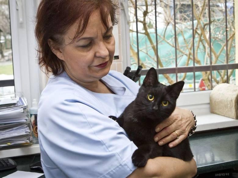 W bydgoskim schronisku jest kot, który wybudza inne zwierzęta z narkoz [zdjęcia, wideo]
