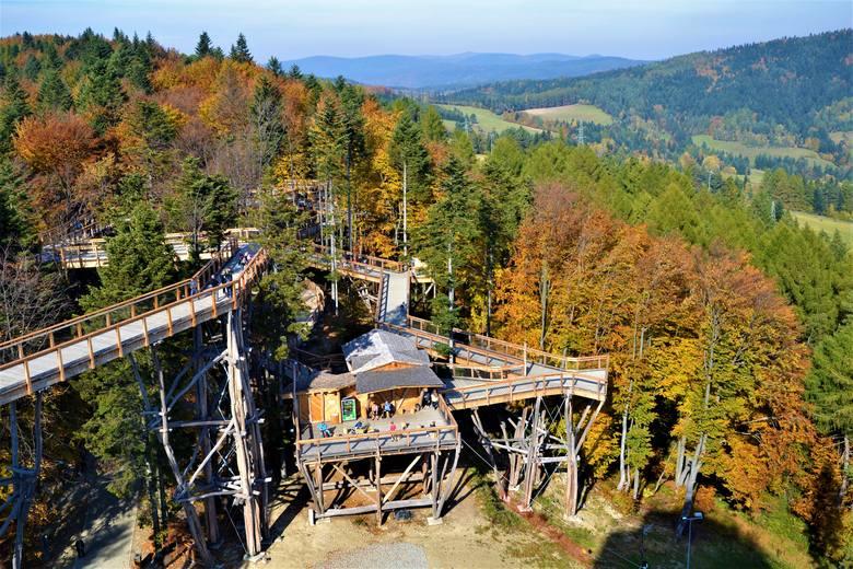 Ścieżka w koronach drzew. Krynickie Słotwiny kontra Bachledowa Dolina na Słowacji [ZDJĘCIA, WIDEO]