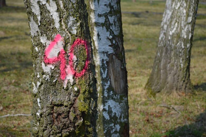 Proszowice. Na terenie parku trwa wycinka drzew