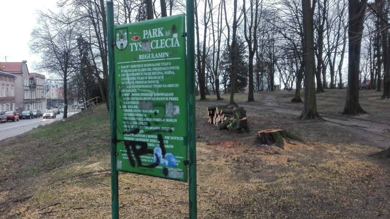 We wtorek (18 lutego) mieszkańców Zielonej Góry, którzy przechodzili przez park Tysiąclecia, zatrwożył widok świeżo ściętych drzew. – To jest straszne.
