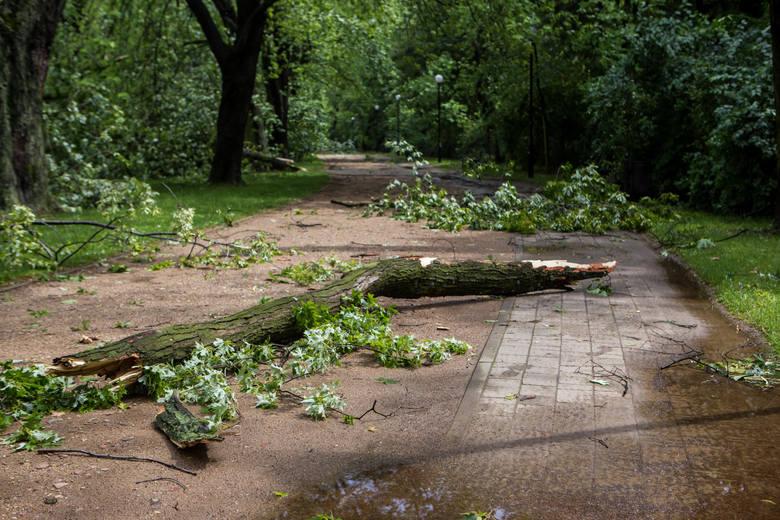 Warszawa: Burze i nawałnice [ZDJĘCIA] Duże zniszczenia, powalone drzewa, uszkodzone samochody