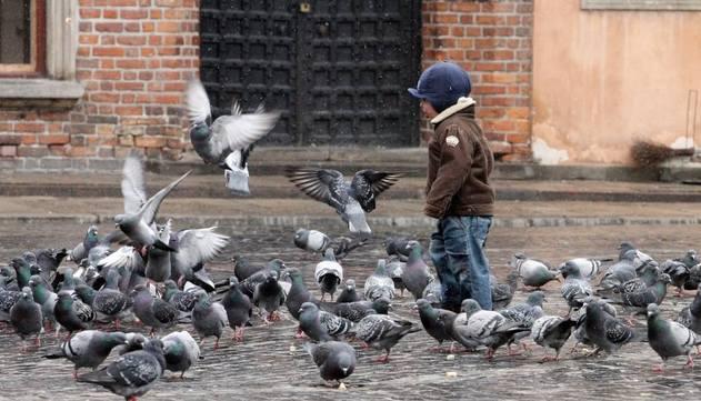 Gołębie brudzą, hałasują, zakładają gniazda na parapetach i balkonach. Jak się przed nimi bronić. Podajemy skuteczne sposoby ich odstraszania.Gołębie