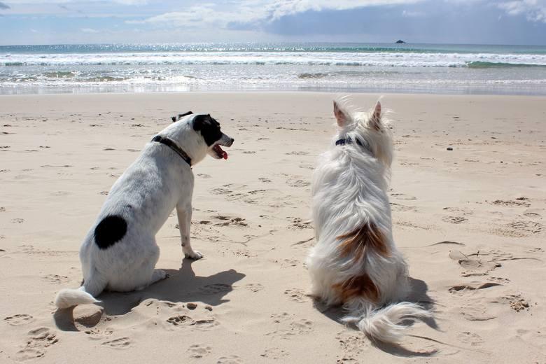6. Pimpek, do nogi!Na znaczną większość polskich plaż wstęp psów pomiędzy czerwcem a wrześniem jest zabroniony. Szukaj plaż, gdzie można wprowadzać czworonogi,