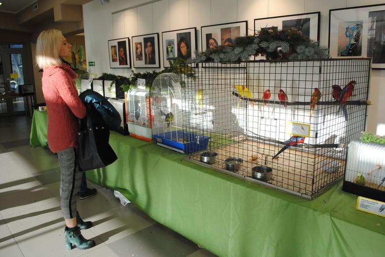 Co roku w Soleckim Centrum Kultury Polski Związek Hodowców Kanarków i Ptaków Egzotycznych organizuje wystawę najpiękniejszych ptaków. Oddział bydgoski