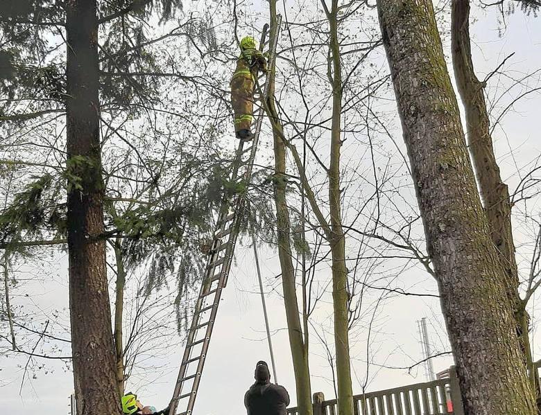 Było późne popołudnie (13 kwietnia), kiedy strażacy ze skwierzyńskiej OSP otrzymali pilne wezwanie. Tym razem pomocy potrzebował maleńki kotek, który
