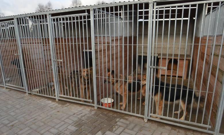 Schronisko zamknięte, bezdomne psy skazane na więzienie, pracownicy nie mają szans wyprowadzić każdego z nich na spacer