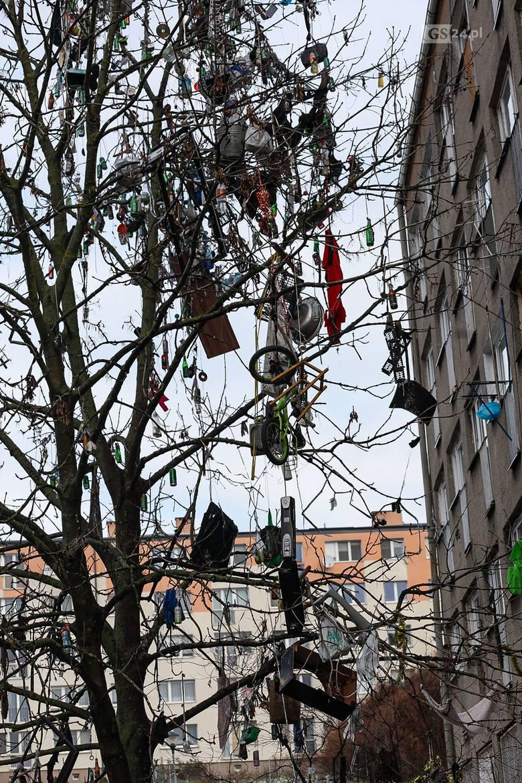 Takie drzewo znajduje się przy ul. Komuny Paryskiej w Szczecinie