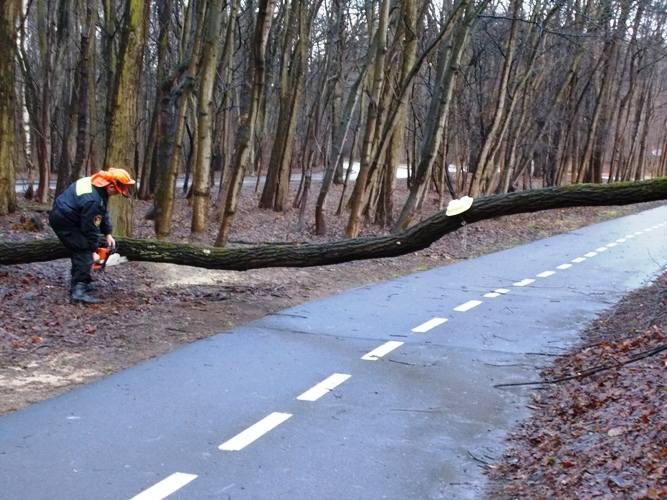 Ul. 11 Listopada. Straż miejska usuwała drzewo z ścieżki rowerowej