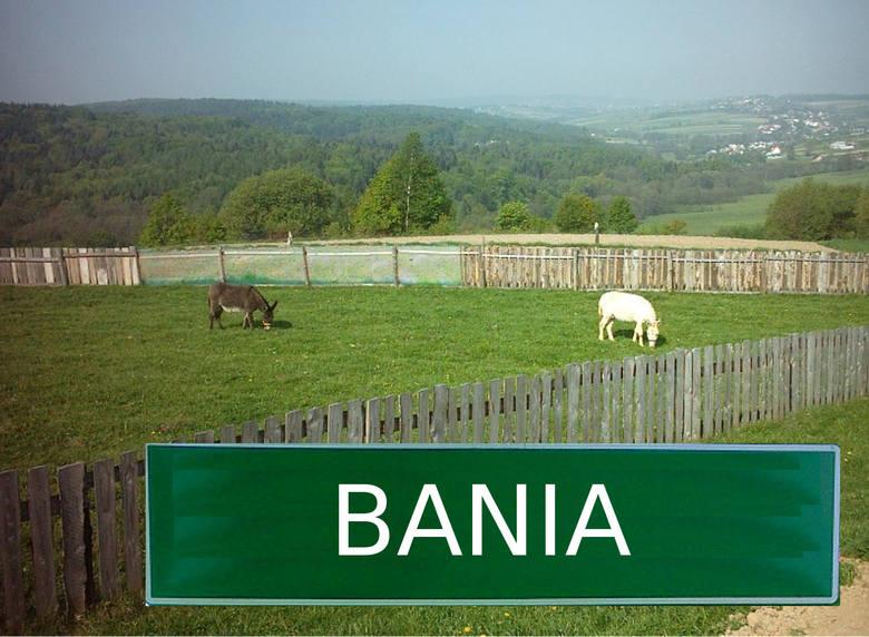 Bania występuje w kilku gminach. Jest m.in. częścią wsi Stanisławice w w gminie Bochnia. Kolejne występują w gminie Szczurowa w powiecie brzeski, Bania