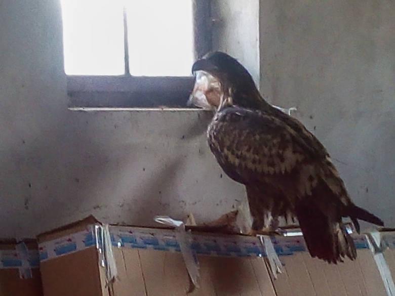 Wezwali leśniczego do martwego ptaka. Wtedy zdarzył się cud (zdjęcia)