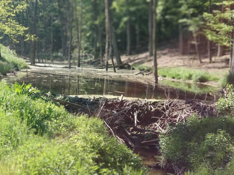 Gmina Trzebiechów – gmina, która dba o mieszkańców i środowisko