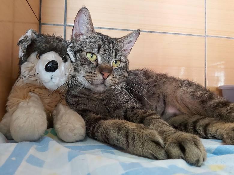 Ere to bardzo łagodny kot. Nieufny przy pierwszym kontakcie, potem domaga się głaskania. Nie lubi, jak się go bierze na ręce. Jest czystym kotem i potrafi załatwiać swoje potrzeby w kuwecie.