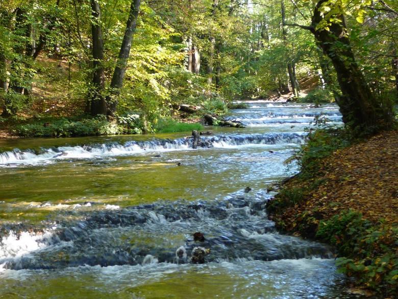 Szlak szumów nad TanwiąTo leśny rezerwat przyrody znajdujący się na terenie gminy Susiec (powiat tomaszowski). Główną atrakcją rezerwatu są 24 progi