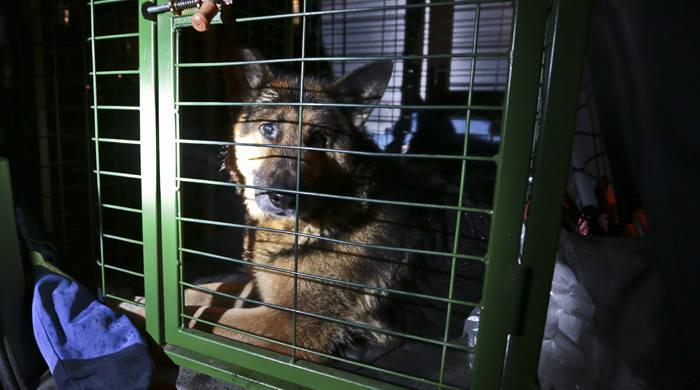 Nietypowe zdarzenie i akcja. W czwartek 4 lutego wieczorem do auta stojącego na poboczu w miejscowości Radomia pod Zieloną Górą... wskoczył pies. Możliwe,