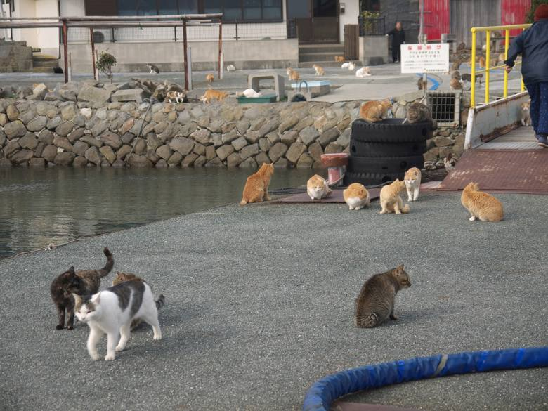 Projekt Mirai. Japonia na czterech łapach – najpopularniejsze zwierzęta domowe z Kraju Kwitnącej Wiśni