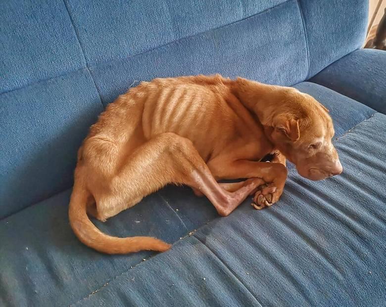 Pies miał wiele chorób m.in. niedoczynność tarczycy, powiększone serce, czy zapalenie płuc