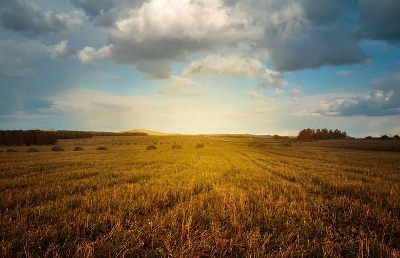 26% rolników obawia się kredytów bankowych - kosztów i formalności