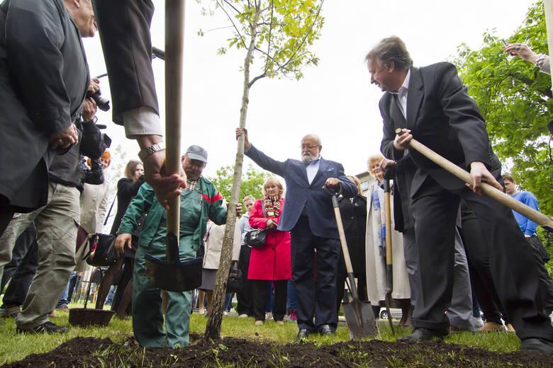 Krzysztof Penderecki w maju 2014 roku zasadził swe drzewo w Bydgoskiej Alei Dębów