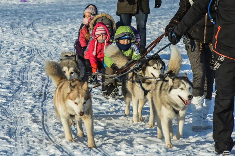 Pięć grup przedszkolaków pojechało psim zaprzęgiem