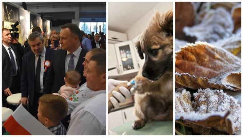 Agro wieści: Szum wokół VAT-u na leki dla zwierząt, ustawa o KGW, Narodowa Wystawa w Poznaniu