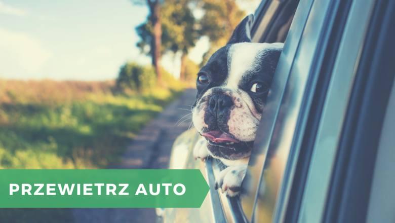 W czasie upałów w kabinach samochodów temperatura znacznie przekracza tę, która panuje na zewnątrz. Z tego powodu co roku przypomina się kierowcom o