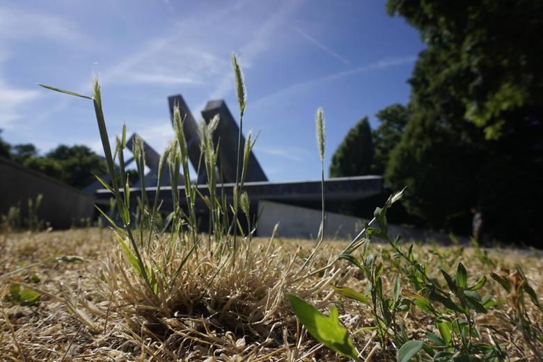 Zdaniem poznańskiego magistratu już można kosić trawę. Temperatury są niższe, zdarzają się opady deszczy, a na miejskich trawnikach i pasach drogowych