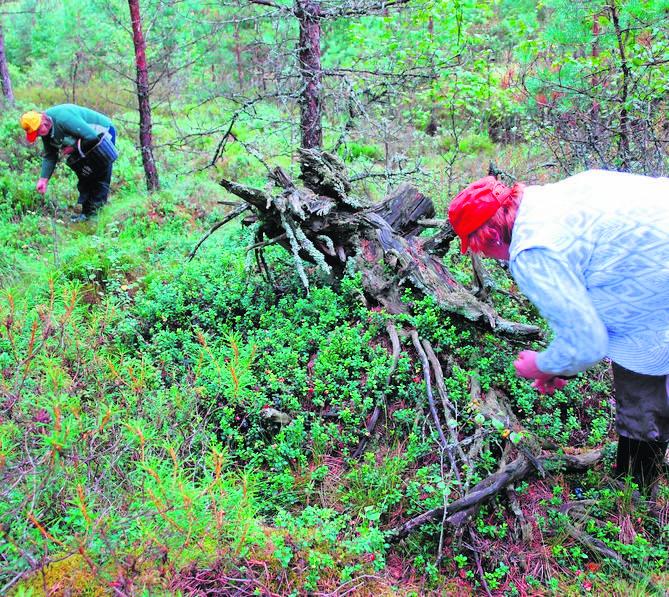 Polak idzie na grzyby do lasu Słowaka. Zabiera grzyby, zostawia śmieci