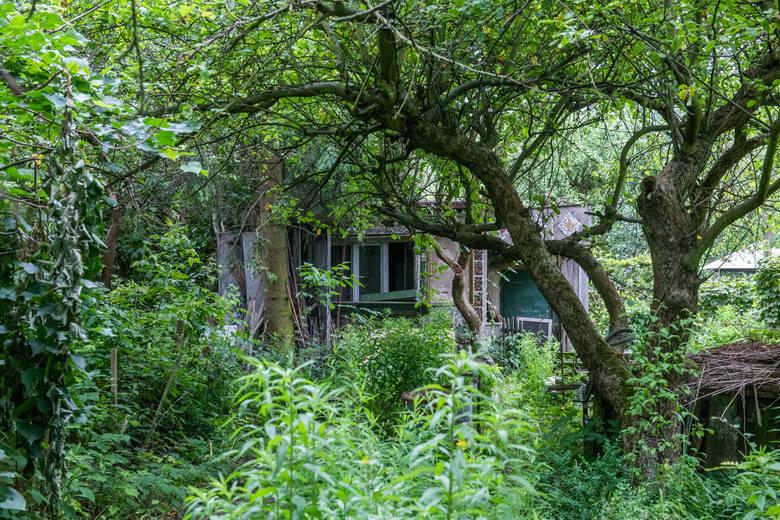 Sporny teren ROD Bogdanka składa się z trzynastu działek. Pozostała część ogrodu, czyli 49 działek ma zostać zachowana.