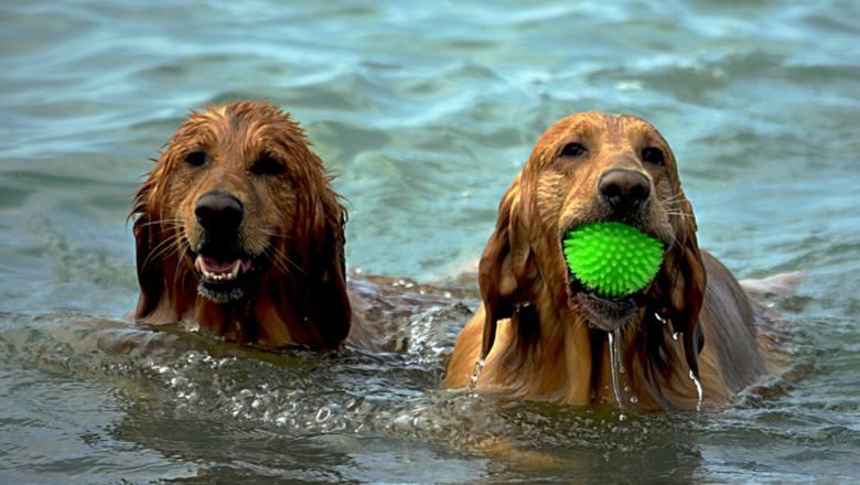 Z psem na wakacje? Dobry pomysł! Pamiętaj tylko o tych 10 rzeczach