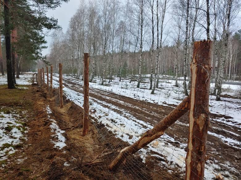 ASF w Lubuskiem. Nowe przypadki zarażonych dzików, nowe ogrodzenia