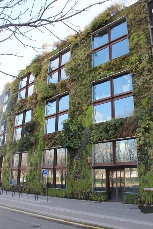 Zielone ściany budynków sposobem na smog? Warszawa może zamienić się w miejską dżunglę. W stolicy mogą powstać ogrody wertykalne