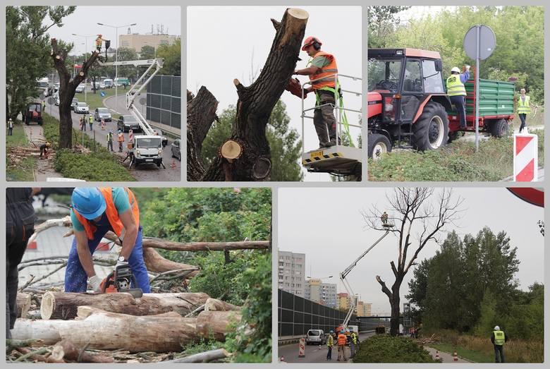 W środowy poranek pracownicy Miejskiego Zarządu Usług Komunalnych i Dróg usunęli starą suchą topolę pochylającą się nad ul. Toruńską we Włocławku. Drzewo