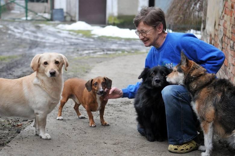 Sołtyska Głogusza Krystyna Smagło należy do osób, które ostatnio adoptowały psa. Jak się okazuje niejednego. Gdy zajeżdżamy do jej zagrody z miejsca