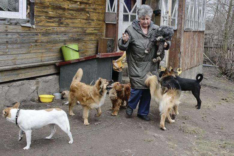 Pani Irena musi mieszkać z 36 psami [ZDJĘCIA]