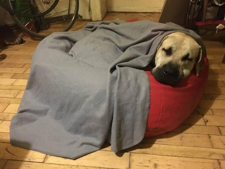 Nieznany sprawca oślepił gazem psa na jednym z osiedli w Poznaniu. Całe przykre zdarzenie dla czworonoga nagrały kamery, a film trafił do sieci. Mężczyzna,