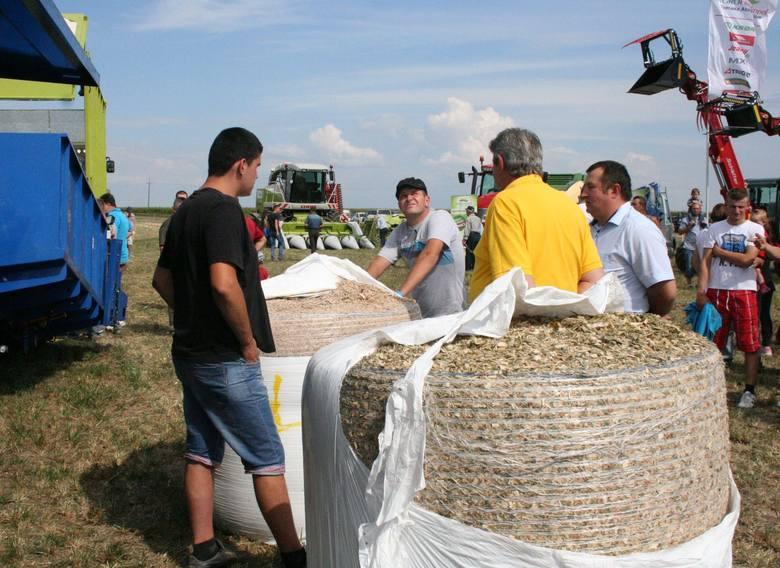 Skoszoną i zmieloną kukurydzę beluje się i foliuje. Potem jest problem zużytych folii