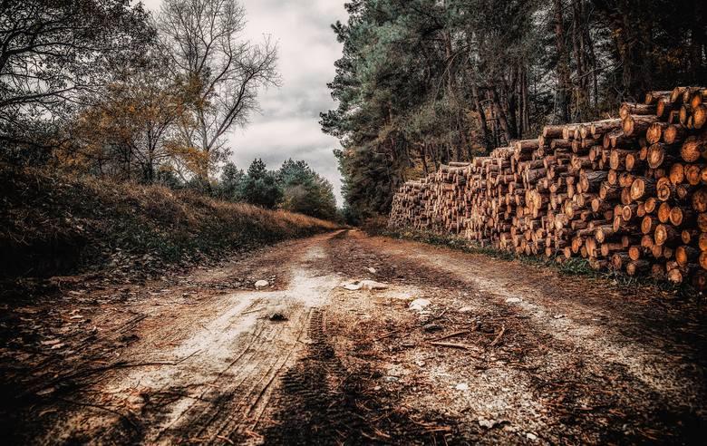 Koniec z masową wycinką lasów. Od tej pory sadzimy, nie wycinamy.Głównym celem powinno być przywrócenie ekosystemów leśnych i bagiennych, które magazynują