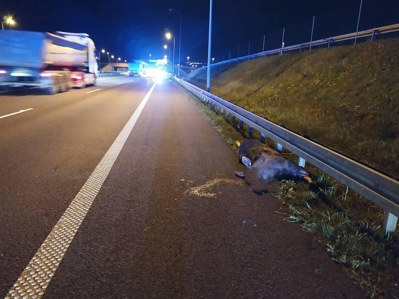 Do zdarzenia doszło w nocy z czwartku na piątek na drodze ekspresowej S8 w pobliżu miejscowości Złotoria