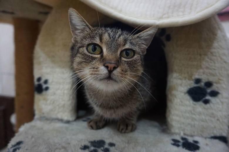 Miminka (K 111/10/19) jest przekochanym kocim stworzeniem. Jest bardzo ufna, przyjazna, garnąca się do kontaktu z człowiekiem. Bardzo kontaktowa, uwielbiająca