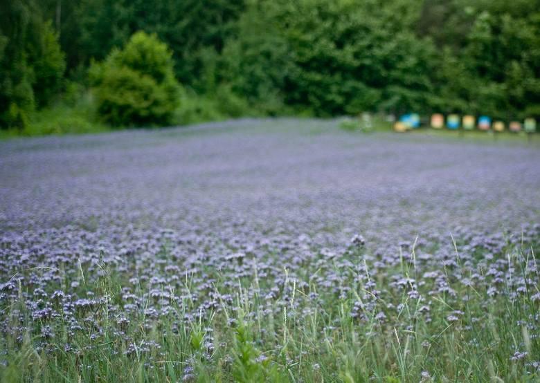 Szkolenie w SP7 w Świeciu. Jakie rośliny sadzić, żeby pszczoły miały pożytek przez cały rok?