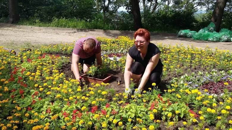 Ruch Społeczny Miasto Mieszkańców zorganizował akcje sprzątania w parku miejskim Stare Planty. Inicjatywa połączona była z sadzeniem kwiatów na klombie