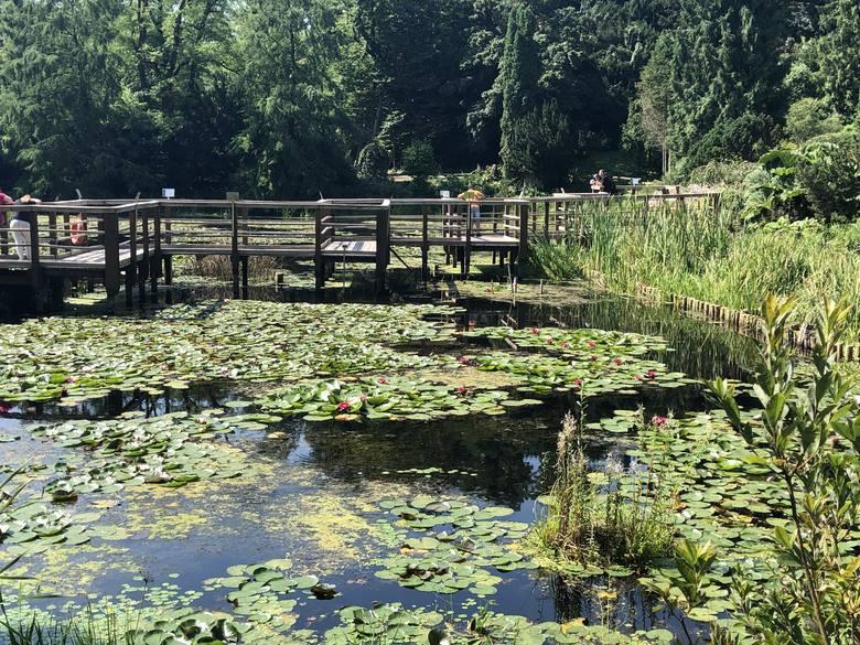 Hortensje, nenufary, róże, słoneczniki, fuksje, czosnek olbrzymi, floksy zachwycają o tej porze roku w Arboretum w Bolestraszycach, położonym 7 km na