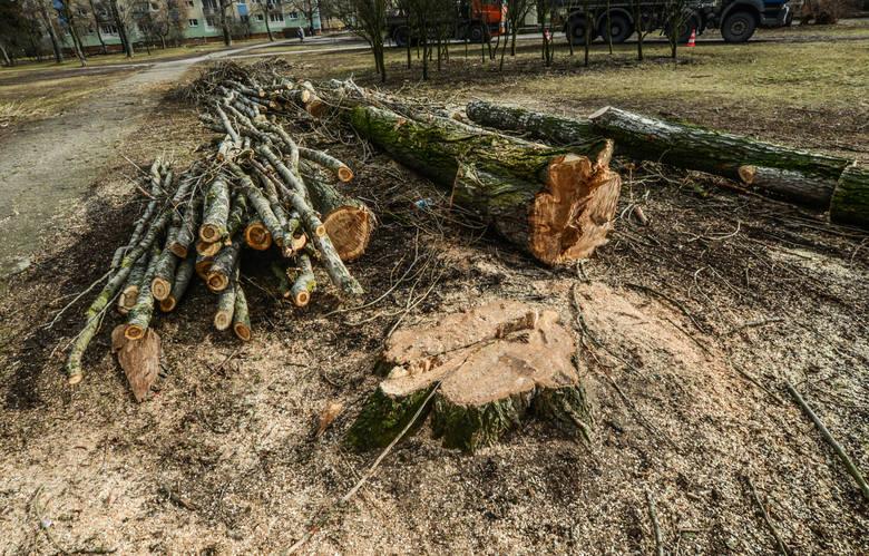 Piły poszły w ruch po wejściu w życie 1 stycznia 2017 roku nowych przepisów, znoszących obowiązek uzyskania zezwolenia na usunięcie drzewa lub krzewu