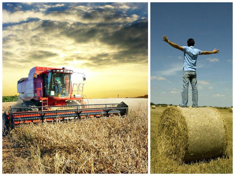 Młody rolniku, chcesz 100 tys. zł? Sprawdź wymagania w 2016