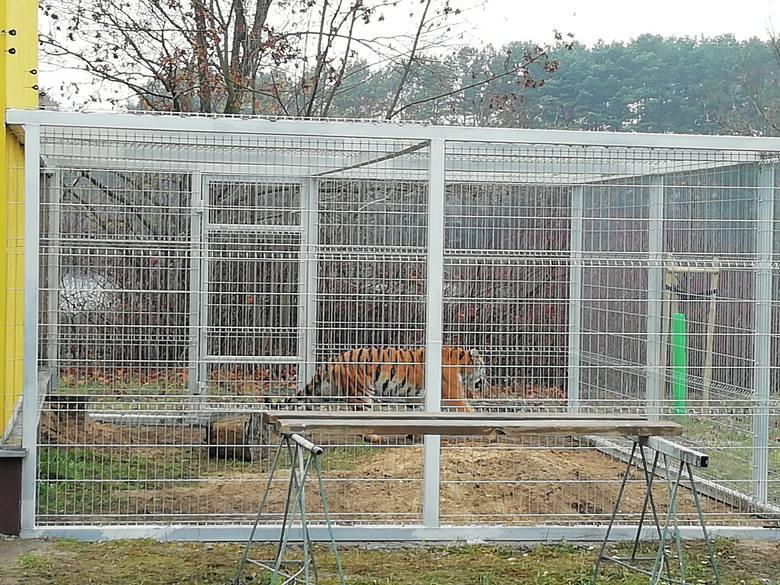 Mimo zielonego światła od Ministerstwa Środowiska i Głównego Inspektoratu Weterynarii wyjazd zwierząt wstrzymują władze niższego szczebla.