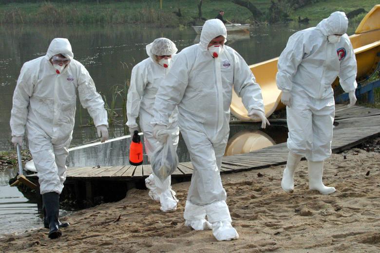 Martwy jastrząb znaleziony w Uścimowie był zarażony wirusem ptasiej grypy