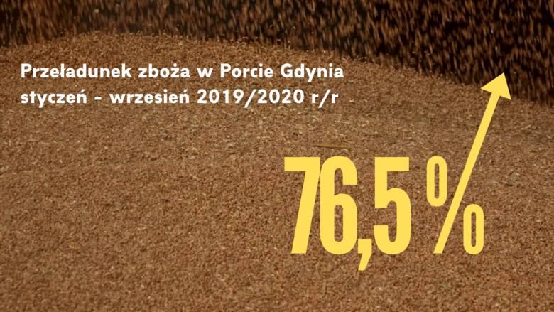 Wzrost przeładunków zboża w Porcie Gdynia pomimo kryzysu