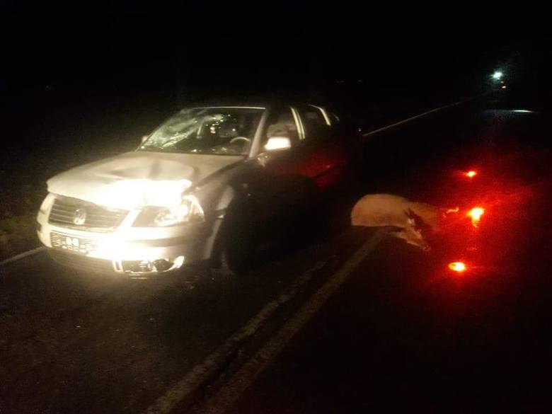W niedzielę po godz. 20 doszło do wypadku samochodu ze zwierzęciem leśnym.